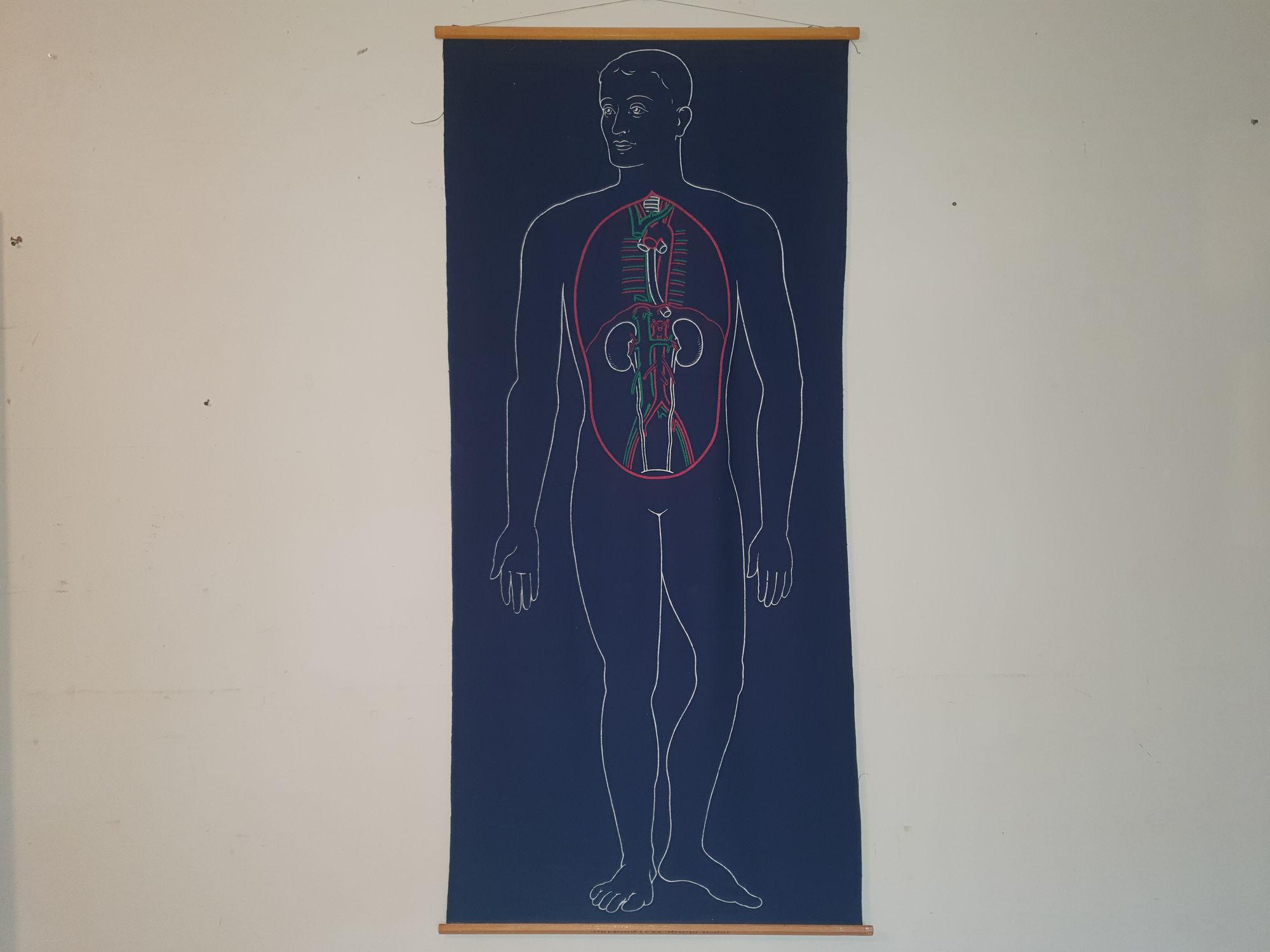 Schoolkaart menselijk lichaam