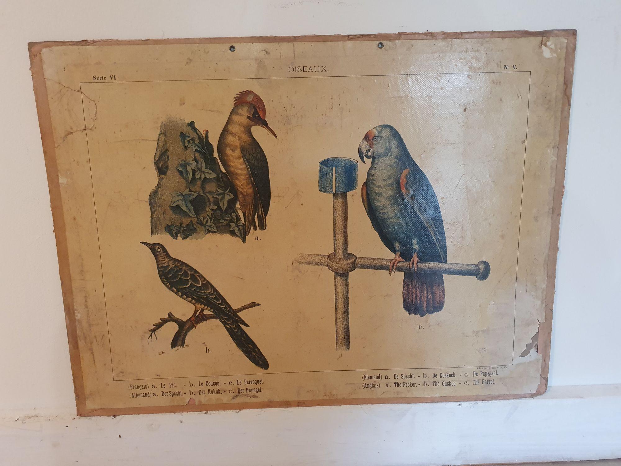 Schoolkaart vogels