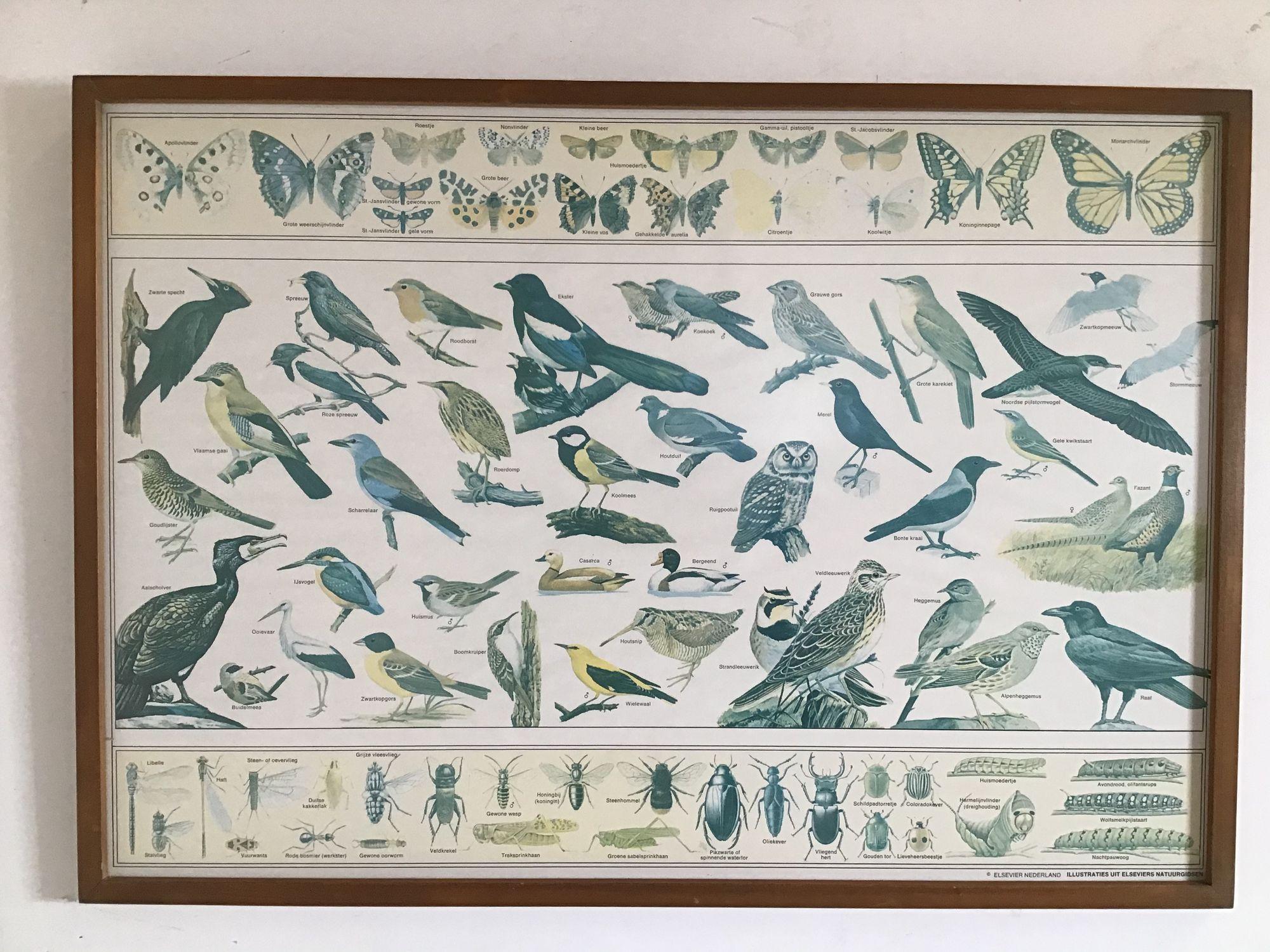 kader vogels