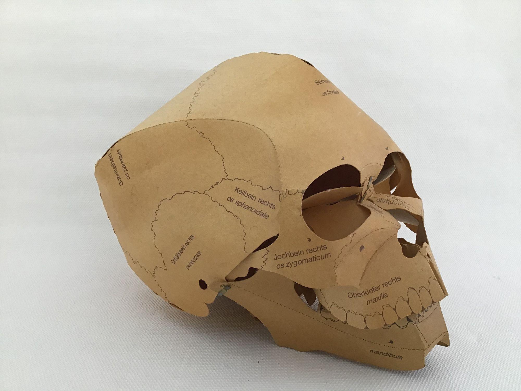 Papieren schedel