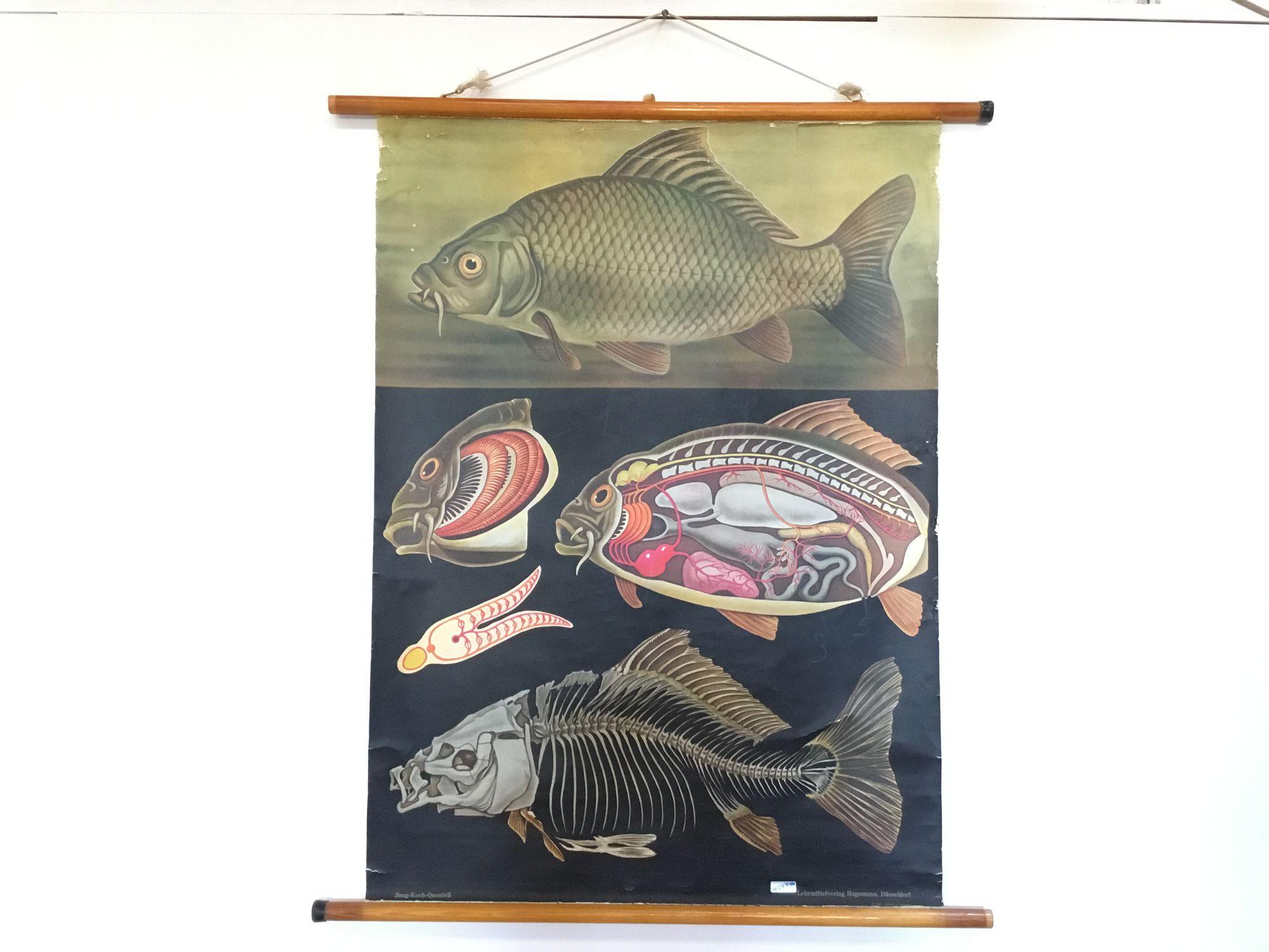 Schoolkaart vis